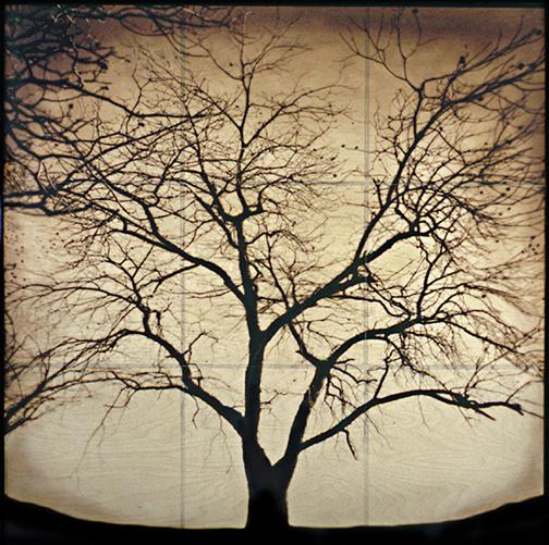 Linda , Big Tree