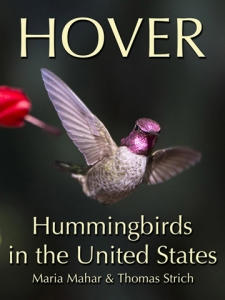 Hover-Hummingbirds-in-the-United-States-768x1024