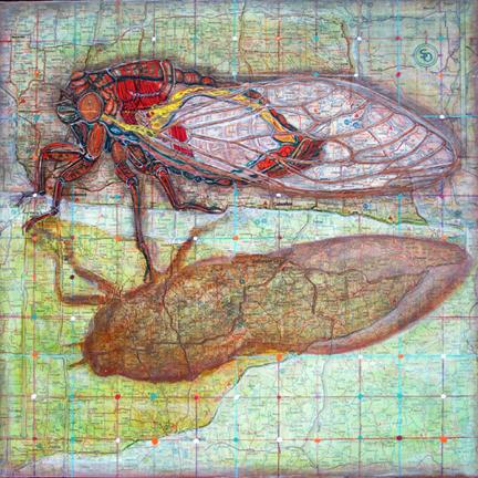 cicada_lores