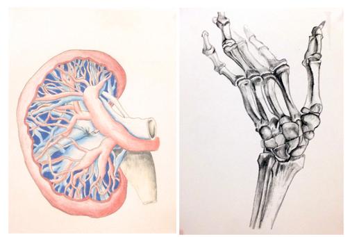 kidneyhand